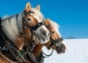Pferdeschlitten Winter